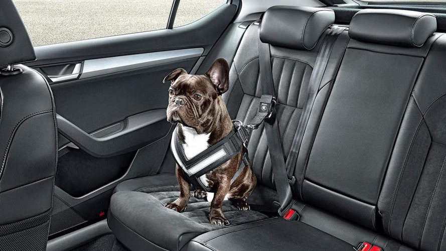 Skoda wants to protect your dog with a seatbelt