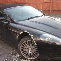 Dog Chews Through UK Man's Aston Martin
