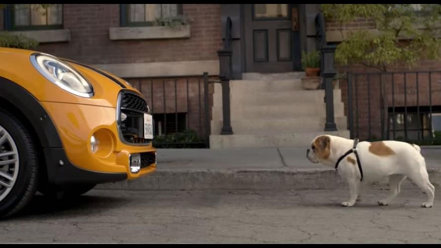 Vídeo: MINI 2014 é encarado novamente por um bulldog
