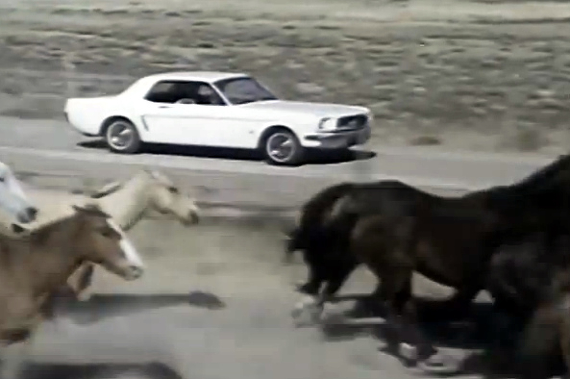 Vintage Ford Video Describes Mustang as