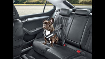 4. Cintura di sicurezza per cani