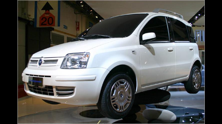 Sparsam und sauber: Fiat Panda mit Erdgas-Antrieb