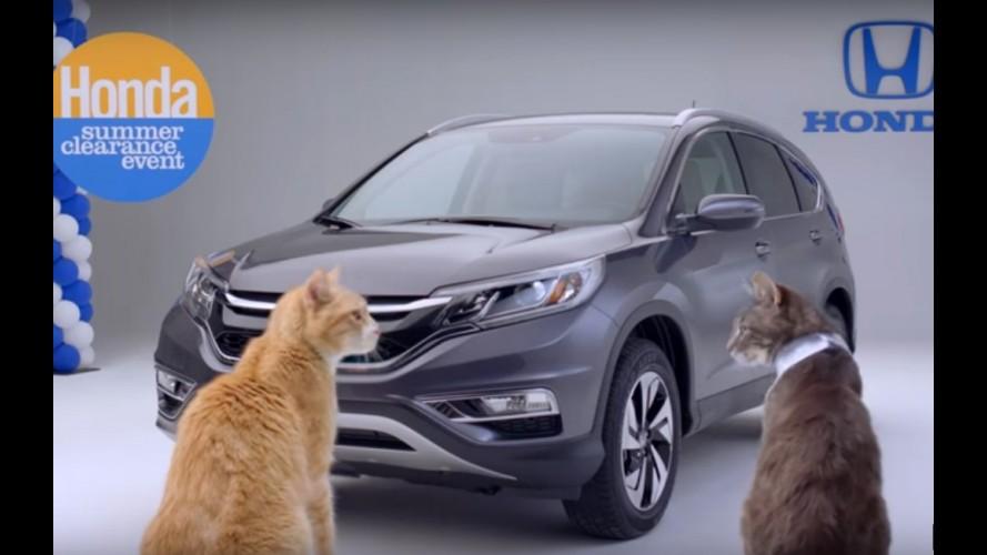 Honda CR-V atrai felinos em curioso vídeo homenageando o