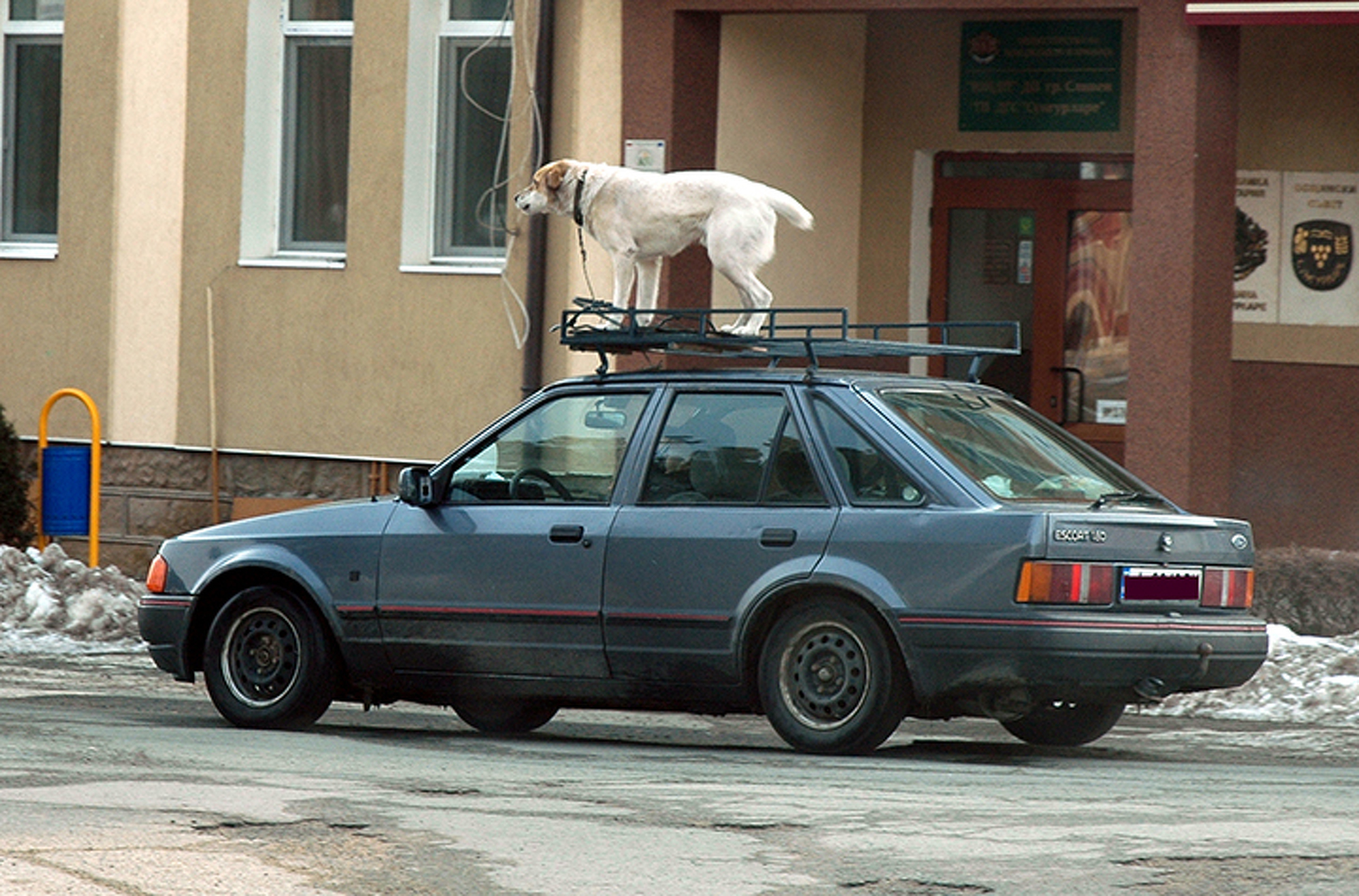 Weird Traffic Laws from Around the World