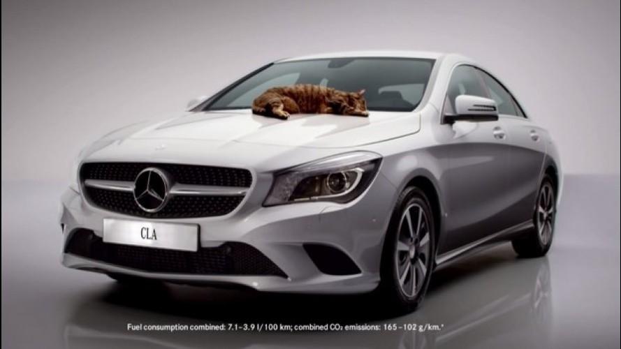 Vídeo: Mercedes usa um gato para mostrar a boa aerodinâmica do CLA