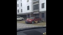 Auto attaccate dai cani, i video in rete 009