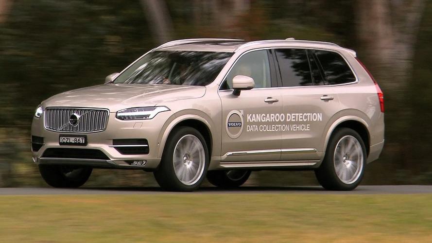 Volvo commences Australian testing for kangaroo detection technology [videos]
