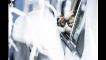 Opel contrata a gata mais famosa da net para estrelar seu calendário 2017