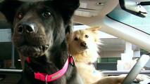 Subaru enthusiasts dog hero screenshot 01.04.2010